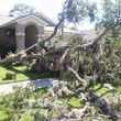 PROFESSIONAL TREE SERVICE & PROPERTY MAINTENANCE