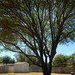 Chuy's Tree Service
