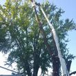 URIBES TREE SERVICE. 24/7 emergency services