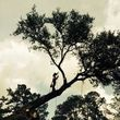 Arborist Aspects LLC (Tree Service)