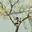 Arborist Aspects LLC (Tree Service)