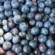 BLUEBERRIES - $4.00 Qt.