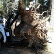 Photo #1: Bobcat/ skidsteer for hire