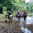 Horseback Riding Lessons by Finley River Stables