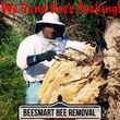 HONEY BEE REMOVAL, LIVE N CHEMICAL FREE!...