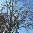 Professional Coronado tree service