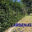 Yard Maintenance by Cardenas Gardening