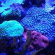 Fish Guy Russ. Fish tank cleaning / Aquarium maintenance