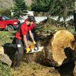 James' Tree Service