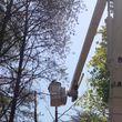 Photo #1: American Made Tree Service