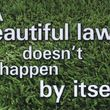 Expert lawn services