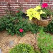TideWater Lawn service & Landscaping