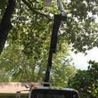 JED Enterprises (TREE SERVICE)