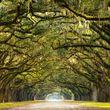 ARBORIST TREE PROFESSIONALS