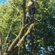 JASON'S TREE SERVICE LLC