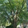 JASON'S TREE SERVICE LLC