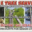 Photo #1: EMERGENCY TREE SERVICE 24/7 WORK GUARENTEE - Lic #1004927