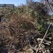 Photo #1: BLACKBERRY :) IVY :) BRUSH REMOVAL :) TREE REMOVAL