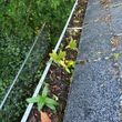 Photo #5: Gutter Cleaning, Window Washing, Power Washing, Moss removal