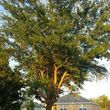 Photo #18: Call Southwest Tree Service for your FREE estimate!!