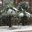Photo #2: PALM TREES IN IDAHO