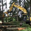 Photo #6: Skilled Logging and Timber Management