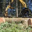 Photo #16: Skilled Logging and Timber Management