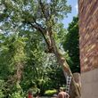 Photo #2: Tree Trimming & Removal **INSURED**