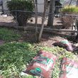 Photo #7: SUMMER YARD CLEAN UP! WEED removal specials mulch deals YARD CLEAN UP